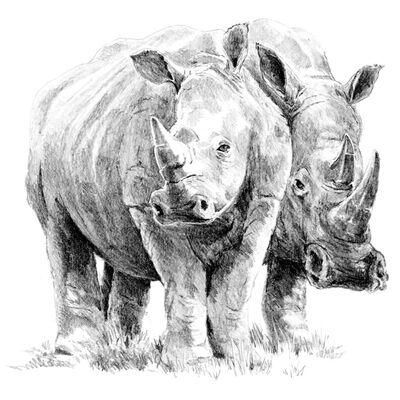 Rhino Pair Sketching Made Easy Set image number 2
