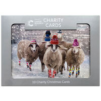 Sheep Cancer Research UK Charity Christmas Cards: Pack of 10