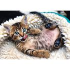 Cheerful Kitten 1000 Piece Jigsaw Puzzle image number 2