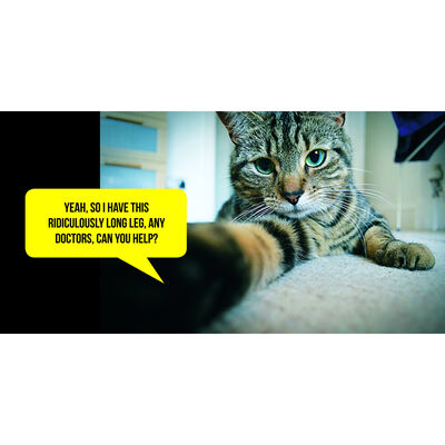 Cat Selfies image number 4