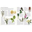 Encyclopedia of Herbal Medicine image number 3