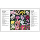 Royal Horticultural Society: How to Garden image number 4