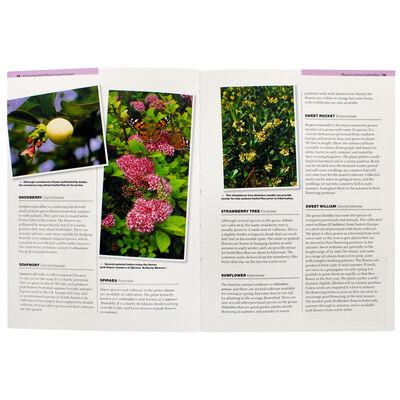 Attracting Butterflies To Your Garden image number 2