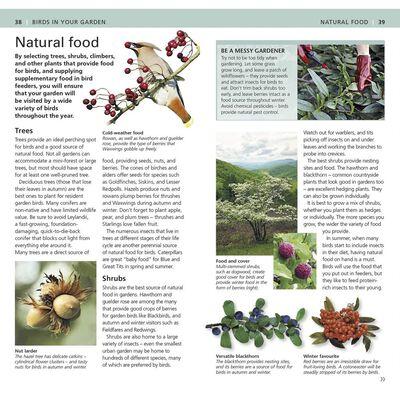RSPB Pocket Garden Birdwatch image number 2