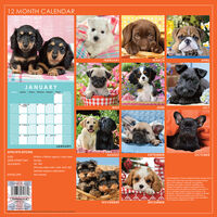 Cute Dogs 2021 Calendar and Diary Set