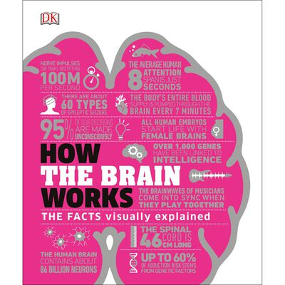 How The Brain Works image number 1