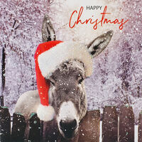 Donkey Christmas Cards: Pack of 10