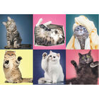 Kitten 500 Piece Jigsaw Puzzle image number 2