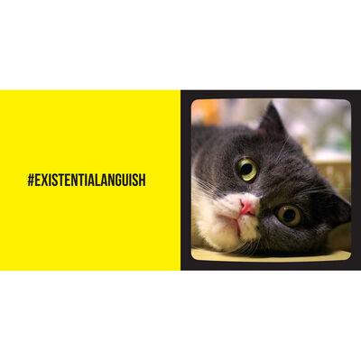 Cat Selfies image number 2