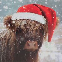 Highland Cow Christmas Cards: Pack Of 10