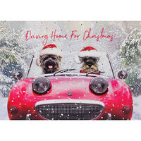 Cancer Research UK Charity Dog Christmas Cards: Pack of 10