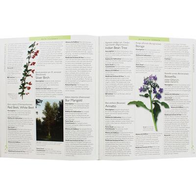 Encyclopedia of Herbal Medicine image number 2