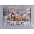 Cancer Research UK Charity Sheep Christmas Cards: Pack of 10 image number 1