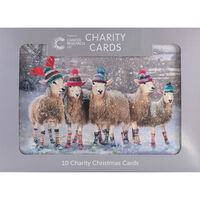 Cancer Research UK Charity Sheep Christmas Cards: Pack of 10