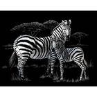 A4 Engraving Art Set: Zebras image number 2