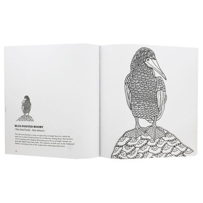 Birds: A Mindful Colouring Book image number 2