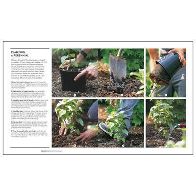 Royal Horticultural Society: How to Garden image number 3