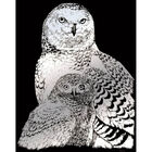 A4 Engraving Art Set: Snow Owls image number 2
