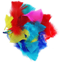 Assorted Coloured Feathers