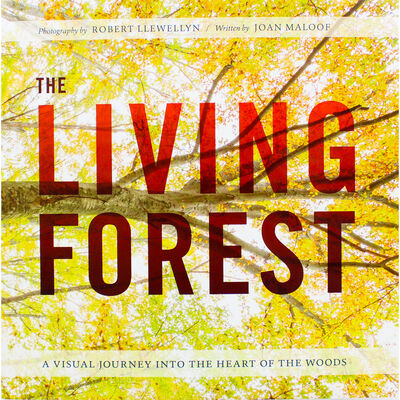 The Living Forest image number 1